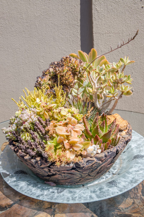 gallery-flora (8)